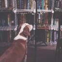 Max Likes Mystery